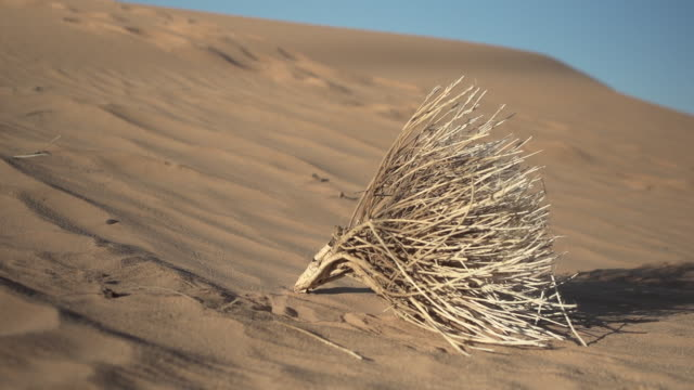 dried brush in sand