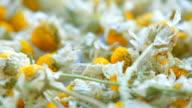 getrocknet Blumen Kamille