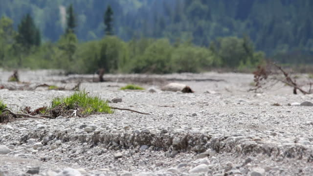 dried up riverbed on hot summer day, heat haze