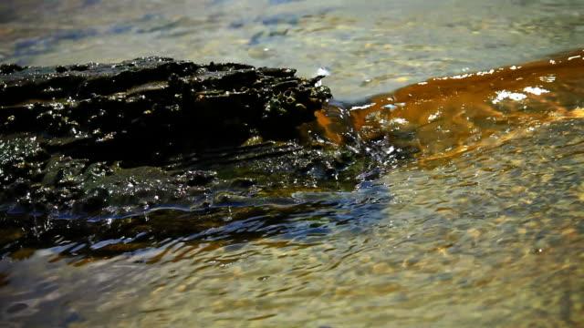 Drift Wood in Water