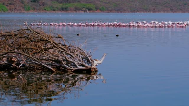 Driftwood & Flamingos On Lake Bogoria Baringo County  Kenya  Africa