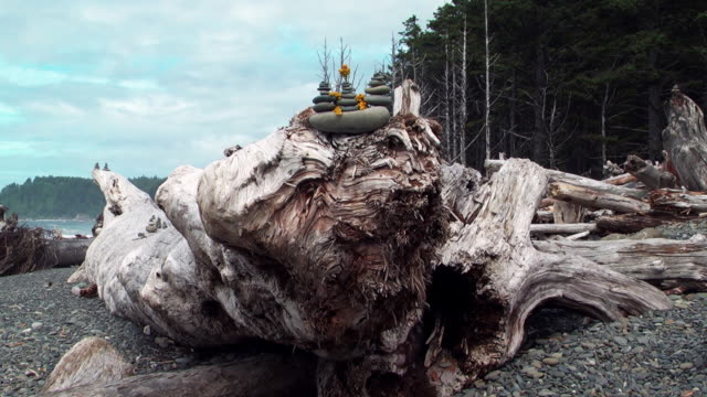 MS   ZO SLO MO  Driftwood with pebble formations on top  /  Washington, United States