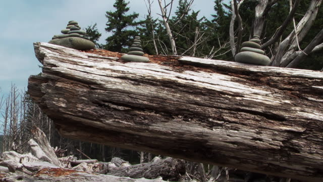 MS  PAN ZO SLO MO  Driftwood with pebble formations on top  /  Washington, United States