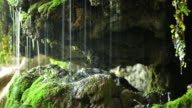 Dripping water over moss