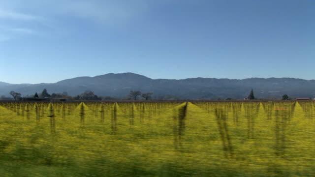 Drive looking into a Napa Valley vineyard