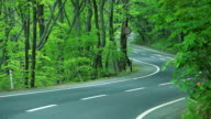Driving a winding road in the forest