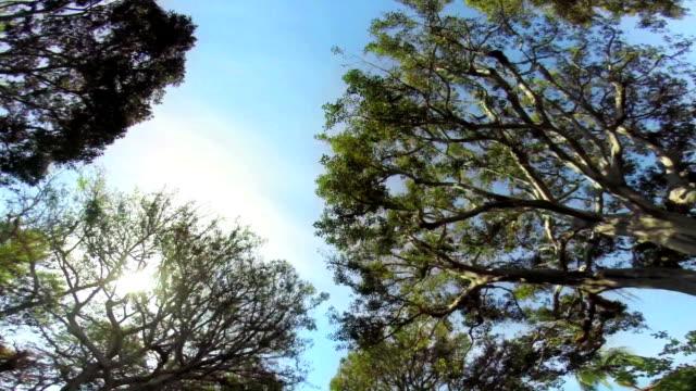 LA WS entlang, von Bäumen gesäumte Straße