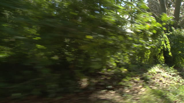 RPOV Driving down a residential tree-lined street, passing lush greenery / United States