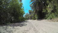POV Driving down dirt road through tropical forest / Palos Verdes, California, United States
