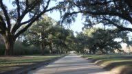 Driving Down Tree Lined Road, Rear POV