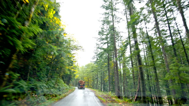 Driving Forest Road