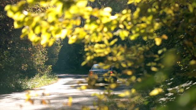 Das fahren auf einer Straße in den herbstlichen Wald.