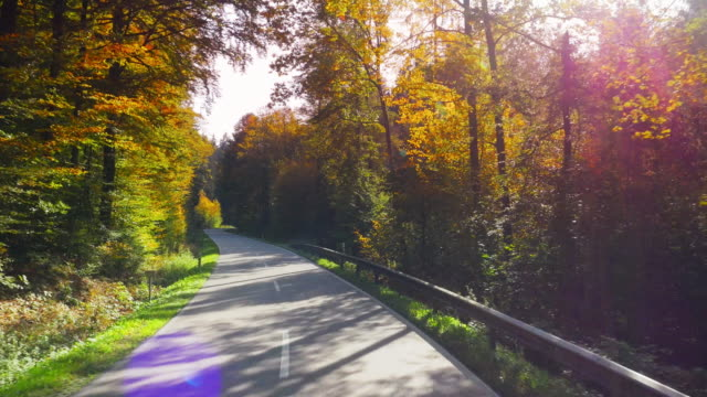 Driving Through Autumn Forest On Sunny Day