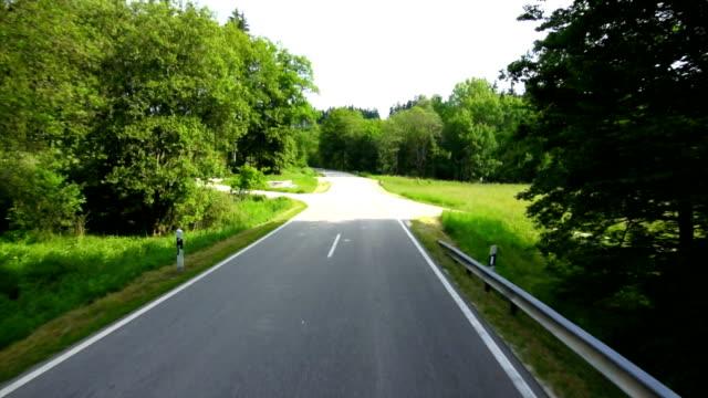 POV TL guida attraverso la foresta verde