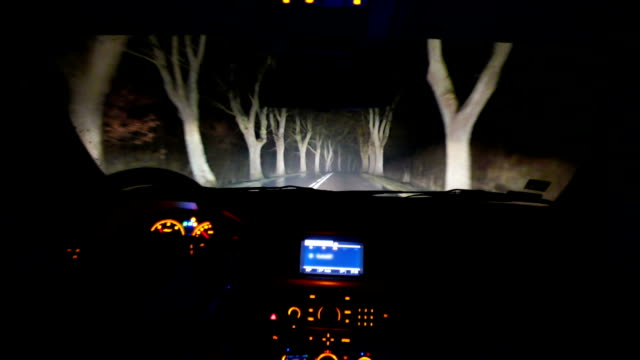 Driving through the forest at night