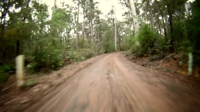 HD TIME LAPSE: Driving Through The Forest