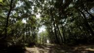 Fahren Sie durch den Wald.  Persönliche Perspektive