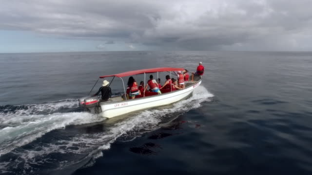 Drone aerial of tourist boat and humpback whales, off Choco, Colombia, South America