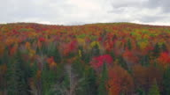 drone flying over foliage in New Hampshire