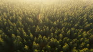 Dronefootage of forest from above in golden hour