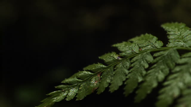 Drops of water drip onto fern frond.