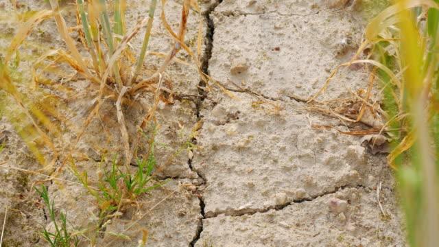 TU Dürre betroffenen Gerste Feld Nahaufnahme (UHD