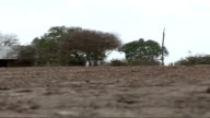 Food distribution / football match / water collection point General view of barren desert land few trees cracked dry earth caused by drought / More...