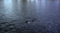 WS HA Drowning man floating unconscious on water, New London, Wisconsin, USA