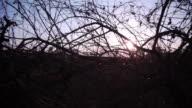 Trockene Zweige