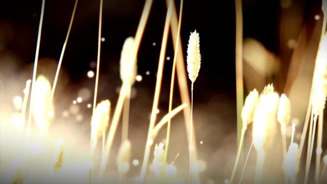 Trockenes Gras mit Partikel Schleife (HD