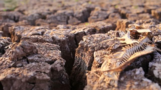 Trockenem Boden