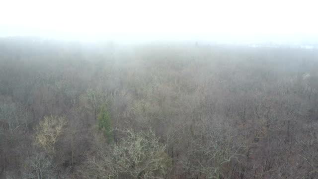 Dry Leafless Treetops in Fog