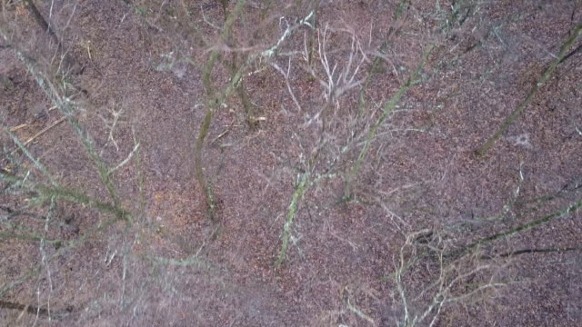 Dry Leafless Treetops