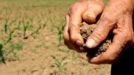 Dry Soil in Corn Field