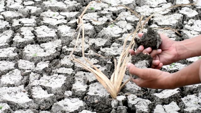 Dry Soil in dead crops