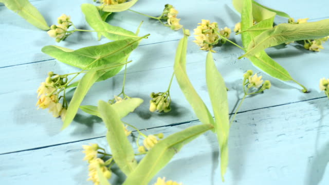 Drying linden flowers