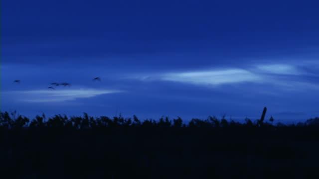 Ducks at Dawn 002