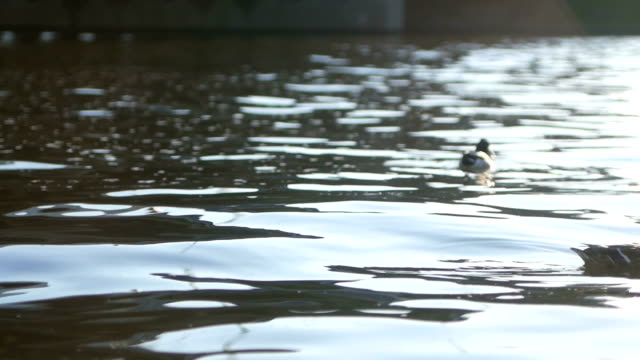 Ducks floating on the river