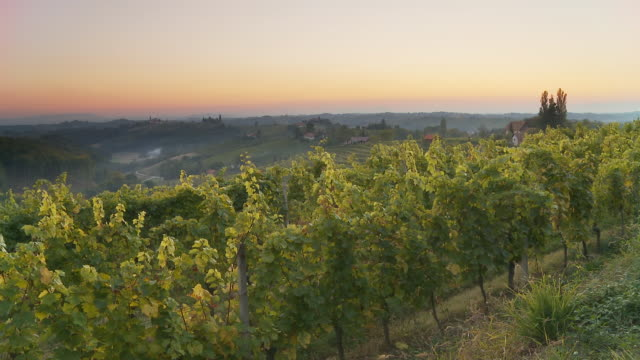 HD TIME LAPSE: Dusk to Night Over Vineyards