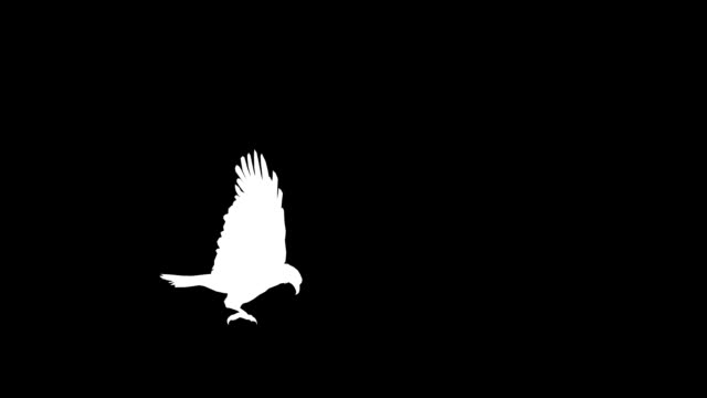 Eagle Attack (Loopable)