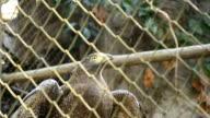 Eagle in gabbia