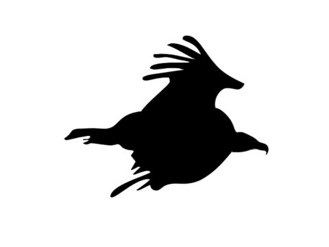 Eagle, raven  or seagull bird animation loop
