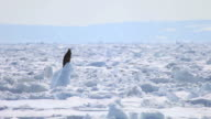 MS Eagle sitting on drift ice at Sea of Okhotsk / Rausu, Japan