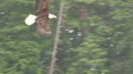 Eagle Swoop