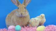 Easter Buddies