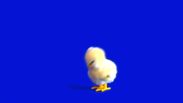 Easter Chick Wind-Up - HD 1080