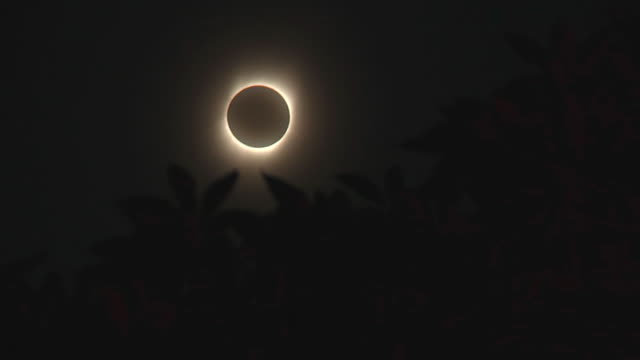 MS Eclipse of sun with tree leaves in foreground / Hangzhou, Zhejiang, China