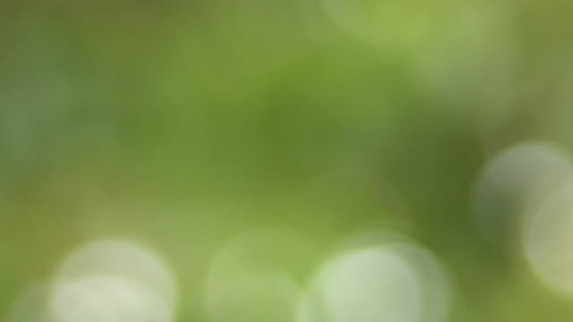 Ecological background 3