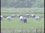 Economic reforms PRESENT Central China CMS Man toward on agricultural vehicle GV Peasants working in paddy field MS Elderly woman working in fields...
