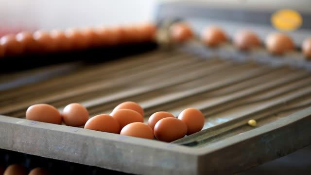 Egg farm industrial packaging